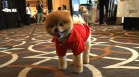 News video: Tech-savvy pet bloggers convene at social media conference